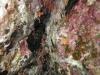 Piccola cernia, Epinephelus marginatus