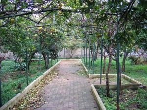 Giardino della villa Scotto di Pagliara.7