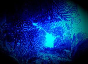 Paesaggio sottomarino nel blu. Con gorgonie