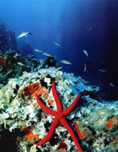 stella marina nei fondali di ponza