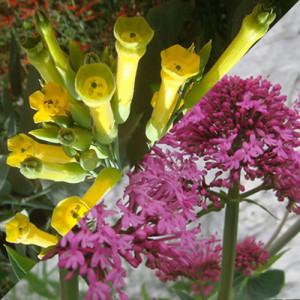 Due fioriture. Bis