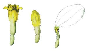 Elementi del fiore
