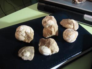 Fossili libici.1