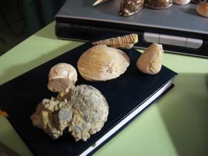 Fossili libici.2
