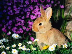 1. Coniglio