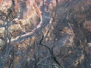 11. Esiti di incendi. Parracine