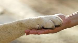 3. I-diritti-degli-animali