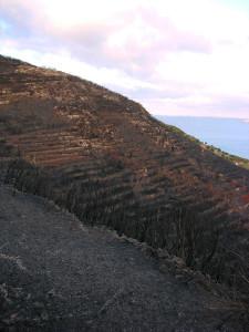4. Incendio contrafforti Monte Guardia