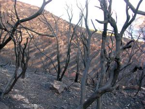 5. Incendi. Primo piano e sfondo mare