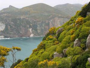 Macchia mediterranea Inizio primavera