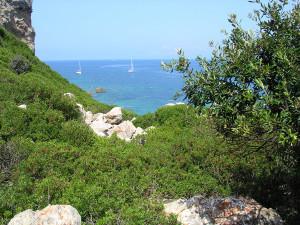 Zannone. Macchia mediterranea copia