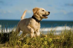 Cane cucciolo. Corse sulla spiaggia