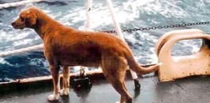 Cane in viaggio nave