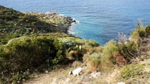 Punta Fieno. Cane