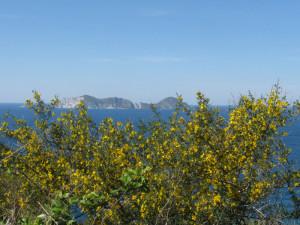 Veduta di Palmarola da sopra lo Schiavone
