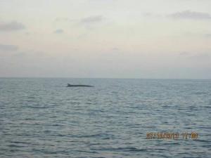Balena. Foto di Erika Di Loreto
