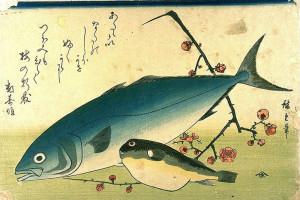 Dipinto di Hiroshige. Ricciola e pesce palla