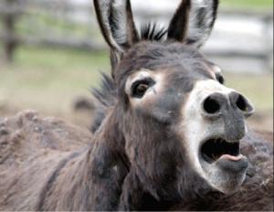 Donkey.1