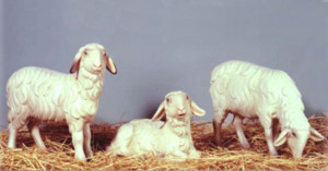 Pecorelle Presepio
