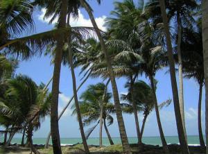 Tropici.2