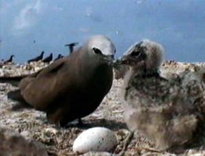 Uccelli uova nidiacei