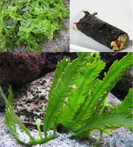4. Alghe.Tris