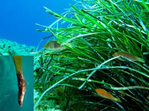 5. Poseidonia