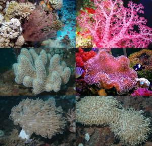 6. Coralli molli.Six