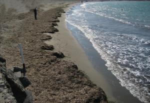 Alghe-sulla-spiaggia