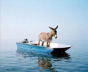 Asino-in-barca