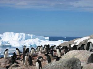 antartide_pinguini