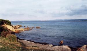 Erba corallina a Vignola
