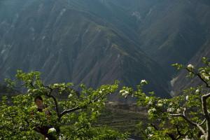 I frutteti tra le montagne del Sichuan
