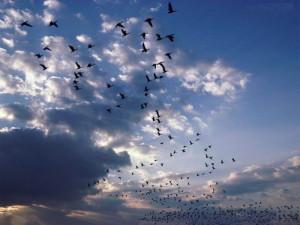 Uccelli_02