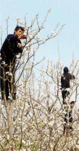 Uomini-ape. Immagine da Repubblica