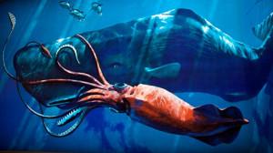 calamaro e capodoglio