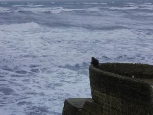Alcione scruta il mare dall'alto