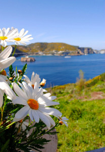 Isola in fiore. Foto di Gaia De Luca