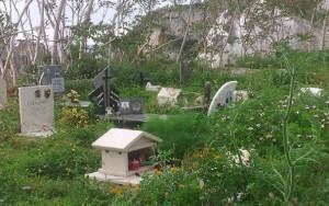 La zona interdetta del Cimitero di Ponza