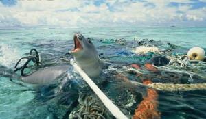Una foca in un mare di rifiuti