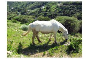 Cavallo dei Conti di Simona B. Feola