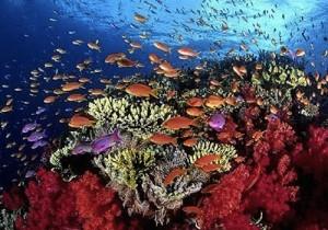La-barriera-corallina