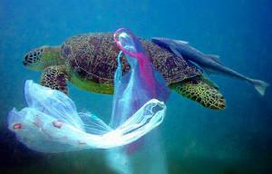 La tartaruga con i sacchetti della spesa