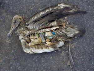 Plastic albatros. Mongabay