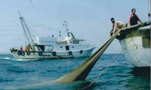 Pesca commerciale