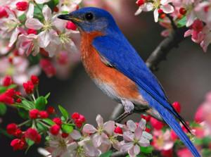 Serie foto uccelli.15