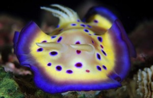 nudibranco 2