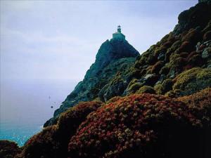 Faro e flora.2