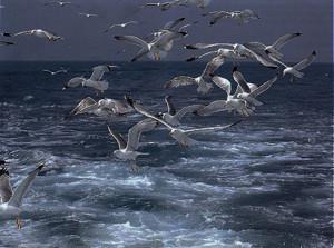 Gabbiani. Mare