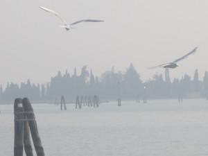 Isola di San Francesco del Deserto. Venezia. Autore Silvio Bon
